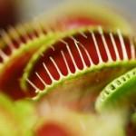 Bild: Kunstart.net, Romana Schaile  / pixelio.de
